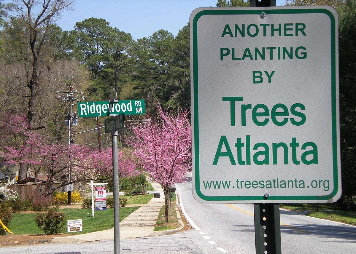 trees atlanta