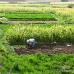 Hope's Edge – A Film that Confronts the Geopolitics of Food Scarcity