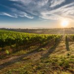 Agriturismo: Italy's Fast Growing Slow Travel Trend
