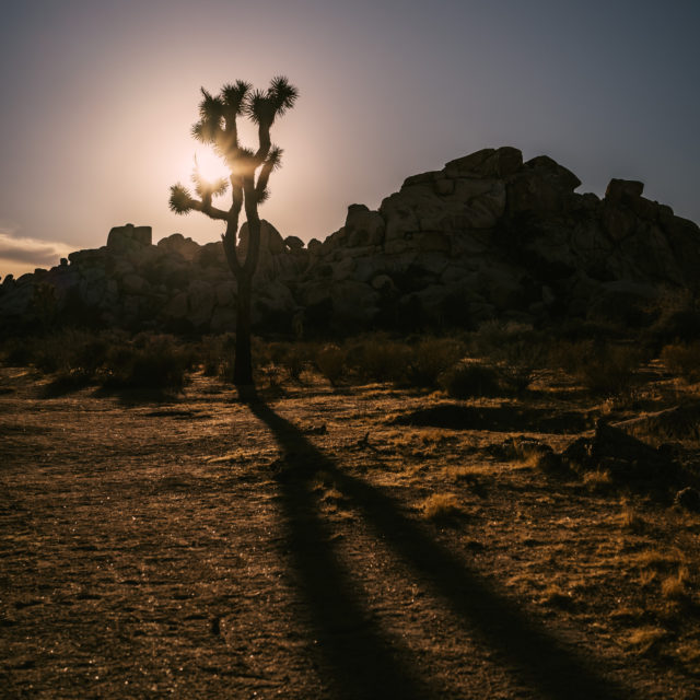 Daily quote inspiration joshua tree