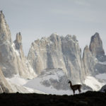 Wildlife Spotting in Chile